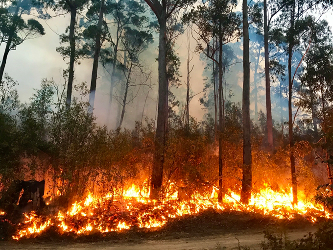 Burning trees and brush