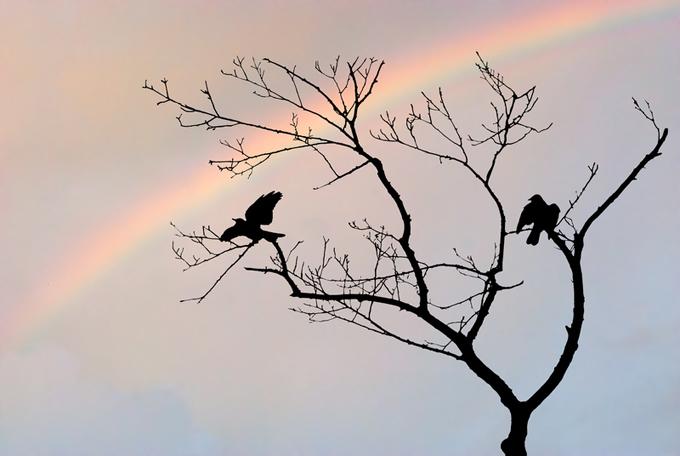 Birds and rainbow