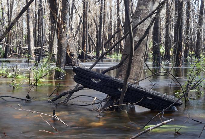 Australia burned trees and flooding