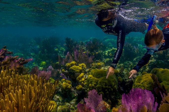 Florida reef