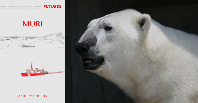 Inside the minds of polar bears » Yale Climate Connections