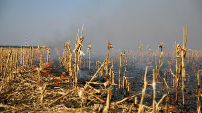 Cornfield wildfire