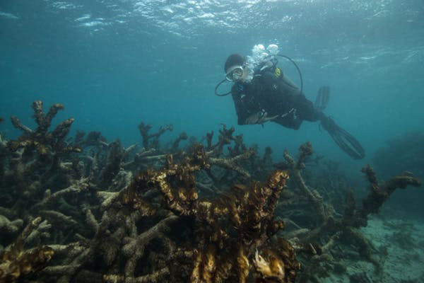 Researcher surveying coral