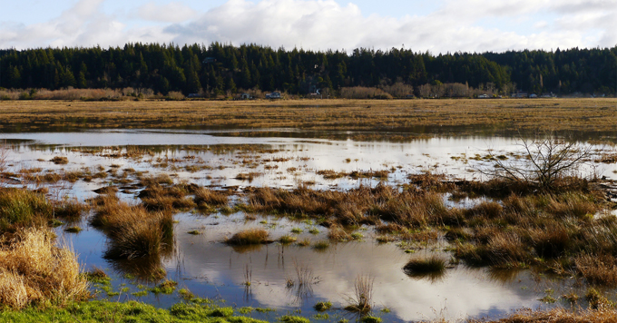 Oregon marsh