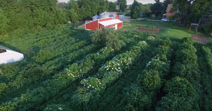 Main Street Project farm
