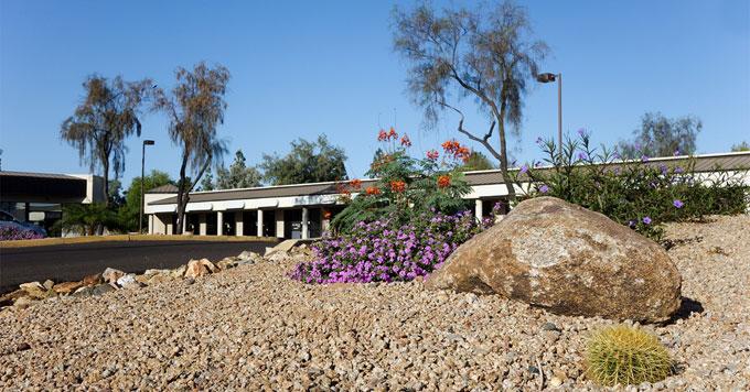 Arizona yard