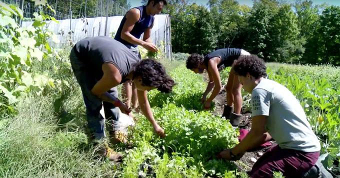 Gardening at Soul Fire Farm