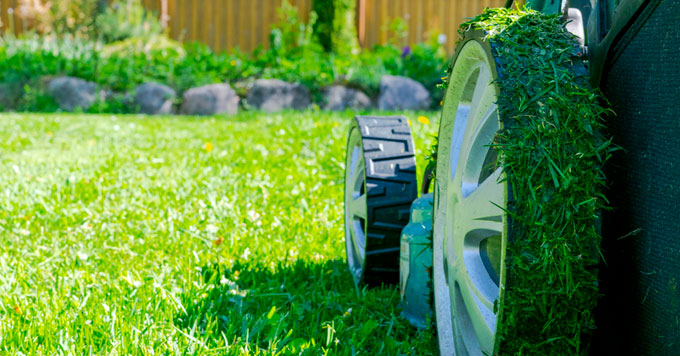 Professor Doug Tallamy urges homeowners to cut lawn area in