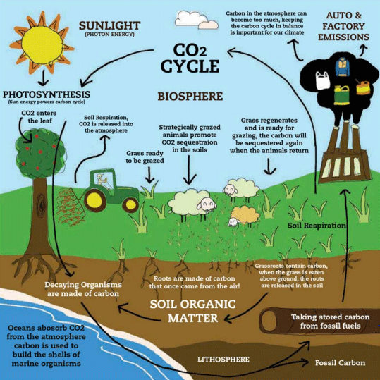 Carbon cycle graphic