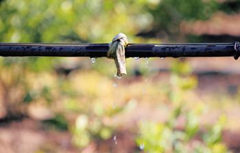 Drip farming example