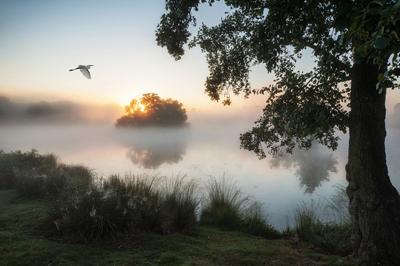 Bird flying over fog