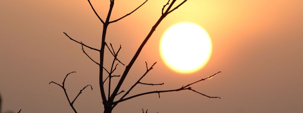 The Sun with tree branch