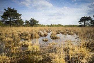 Peatlands