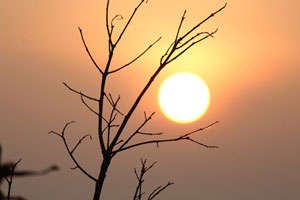 The sun behind tree branches