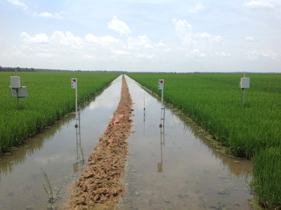 Monitoring rice fields