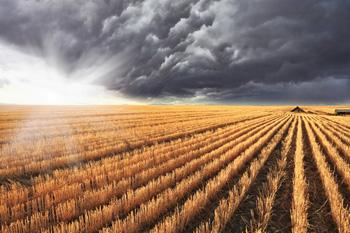 Montana crop