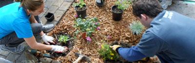 Planting a sidewalk garden