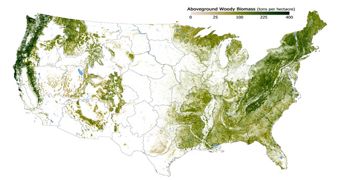 Forest biomass map