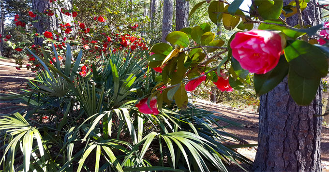 South Carolina Botanical Garden