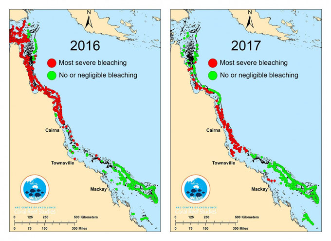 2016 and 2017 coral bleaching
