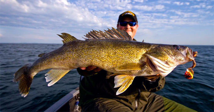 Fisherman and walleye