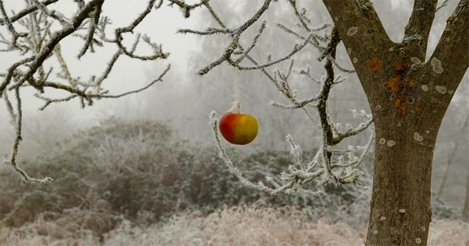 Apple in frost