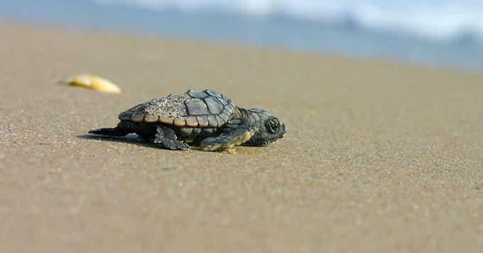 Hatchling on sand