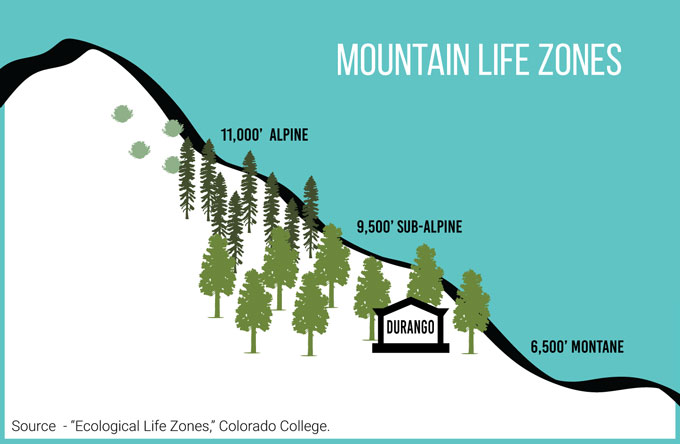 Mountain life zones