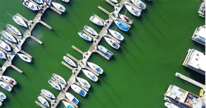 Algae bloom in marina