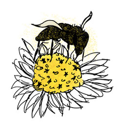Flower and bee illustration
