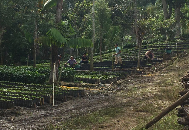 Guatemala farm