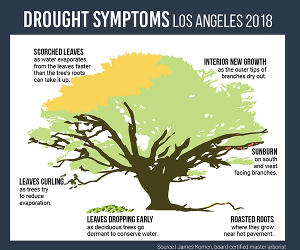 Drought symptoms