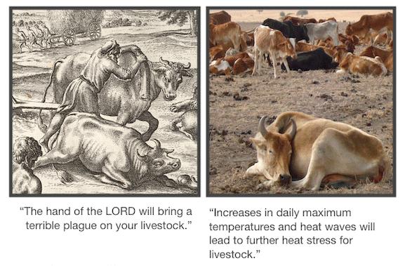 Image 1 - livestock