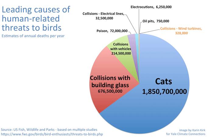 Scale of bird deaths