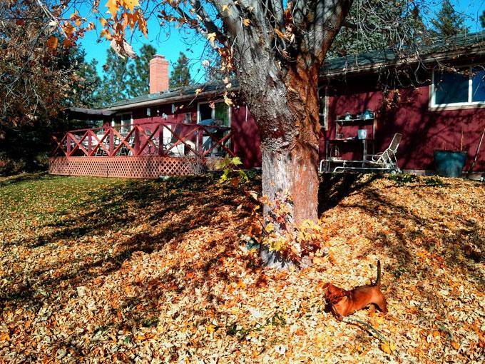 Yard leaves