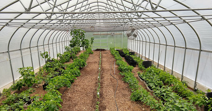 Threefold Farm greenhouse