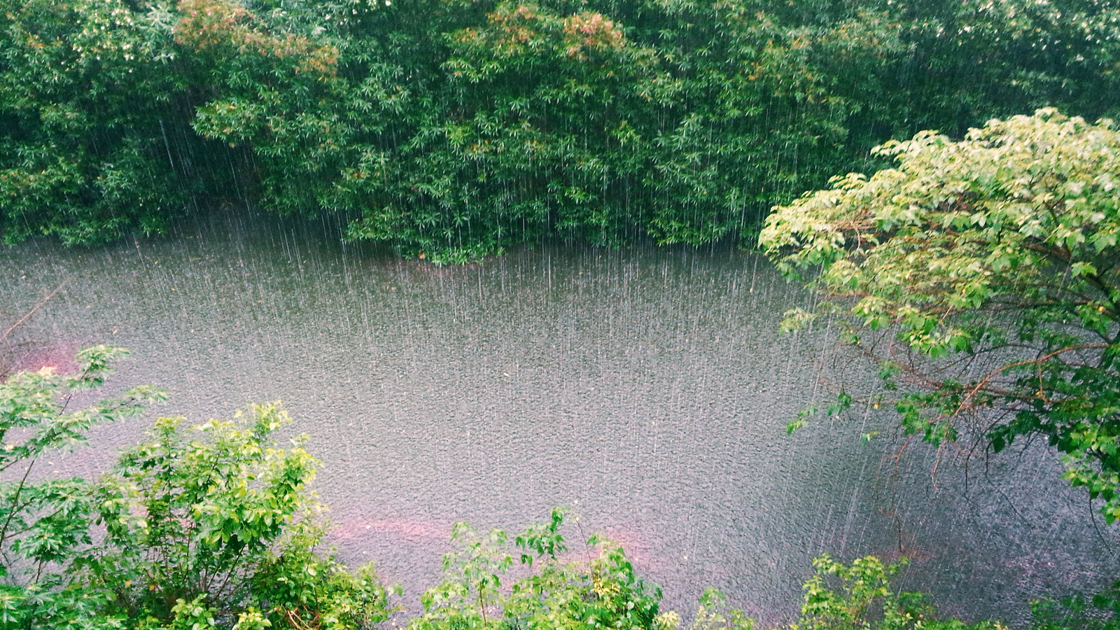 Downpour of rain image
